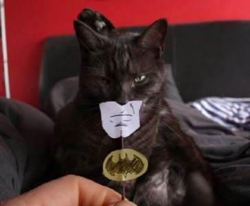Batman est un chat